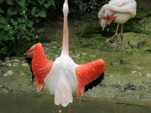 Rosa_Flamingo_9548_1024