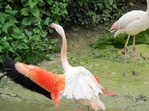 Rosa_Flamingo_9549_1024