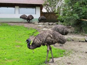 Emu_0933_1024