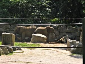 Afrikanischer_Elefant_1065_1024
