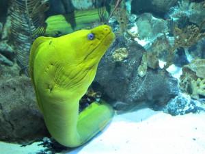 Aquarium_Grüne_Moräne_2542_1024