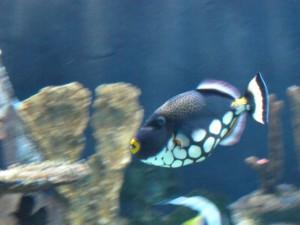 Aquarium_Leopardendrücker_2549_1024