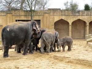 Asiatischer_ Elefant_1312_1024