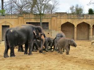 Asiatischer_ Elefant_1314_1024