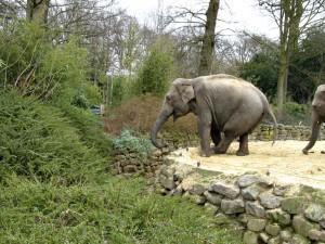 Asiatischer_Elefant_1222_1024