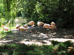 Chile_Flamingo_4307_1024