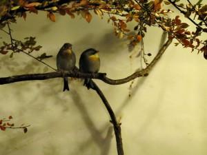 Chinesischer Sonnenvogel_1186_1024