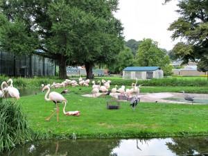 Flamingo_3252_1024