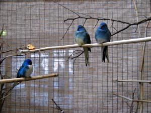 Glanz 1,0 blau 0,1 blau+pastellblau_1024