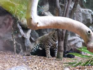 Leopard_2265_1024