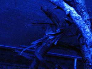 Nachttierabteilung_Beutelflughörnchen_5152_1024