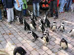 Pinguiin-Wanderung_0023_1024