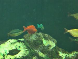 Regenbogenfische_0401_1024