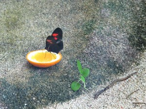 Schmetterling_0266_1024