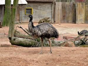 Emu_1307_1024