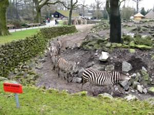 Zebra_1205_1024