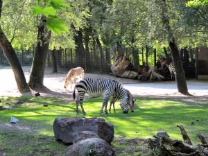 Zebra_3562_1024