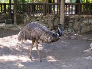 Emu_5891_1024