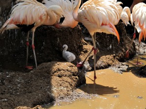 Flamingo_2999_1024