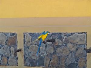 Papageienshow-Gelbbrustara_6431_1024