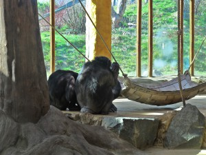 Schimpanse_4582_1024