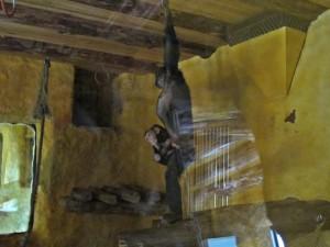 Schimpanse_4591_1024
