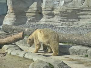 Eisbär_0002_1024