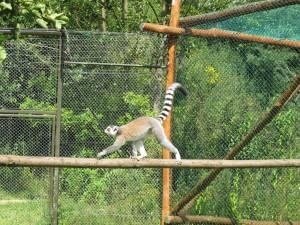 Madagaskar-Anlage_Katta_5248_1024