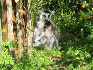 Madagaskar-Anlage_Katta_5265_1024