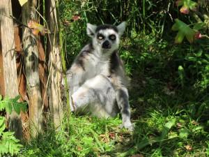 Madagaskar-Anlage_Katta_5267_1024