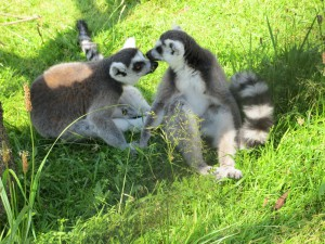 Madagaskar-Anlage_Katta_5268_1024