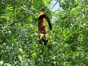 Madagaskar-Anlage_Roter_Vari_5239_1024