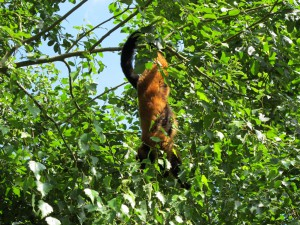 Madagaskar-Anlage_Roter_Vari_5240_1024