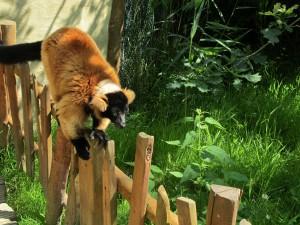Madagaskar-Anlage_Roter_Vari_5259_1024