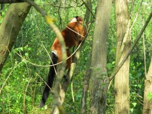 Madagaskar-Anlage_Roter_Vari_5263_1024