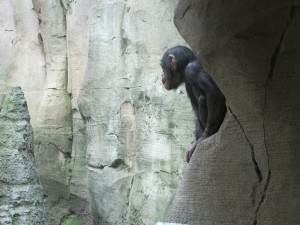 Schimpanse_9081_1024