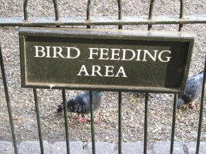 St_James_Park_Bird_Feeding_Area_0249_1024