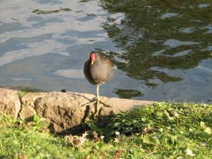 St_James_Park_Bird_Feeding_Area_0253_1024