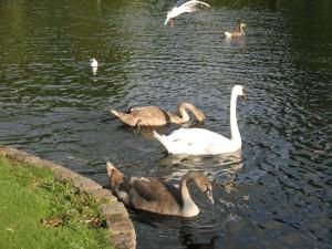 St_James_Park_Bird_Feeding_Area_0254_1024
