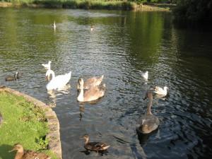 St_James_Park_Bird_Feeding_Area_0255_1024