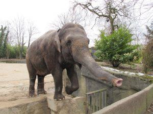 Asiatischer_Elefant_8799_1024