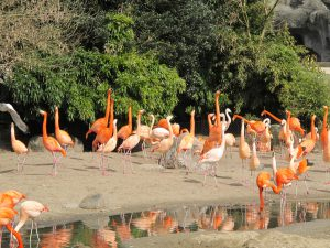Chile_+_Kuba-Flamingo_8874_1024