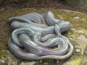 Riesenschlangen_8851_1024