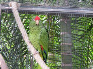 Tukuman-Amazone_8148_1024