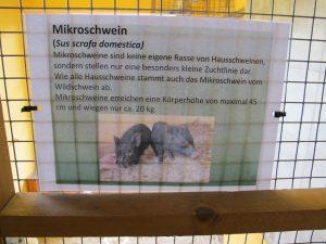 Mikroschwein_5593_1024